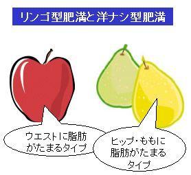肥満体型と内臓脂肪