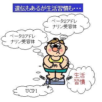 日本人の肥満遺伝子